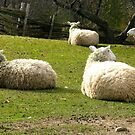 Sheeping by smileyfaces