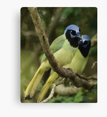 Just a Pair of Green Jays Canvas Print