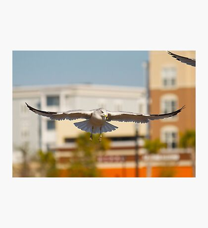 Seagull in the City Photographic Print