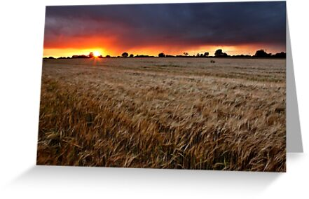 Sunset Through The Rain, Essex (2) by Mat Robinson