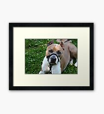 Meeting Champ on July 29, 2012 Framed Print