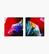 Obscured - 120 Color Holga Diptych  Photographic Print