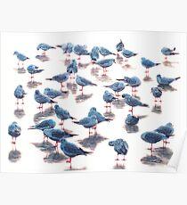 Blue bird V Poster