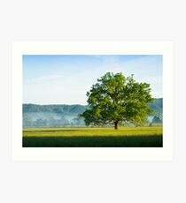 Mighty Oak Tree - Cades Cove, Smoky Mountains National Park Art Print