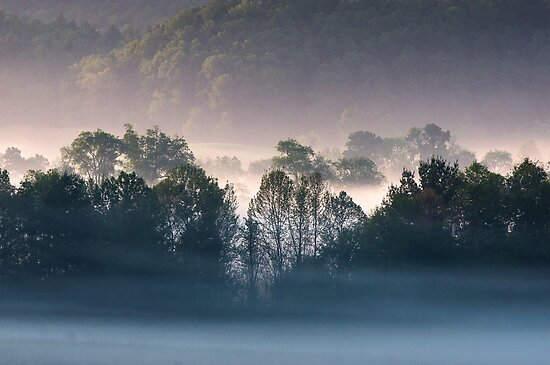 Quot Fog Backlit Tree Line Silhouette In The Valley Cades