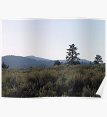Sagebrush and Juniper Poster