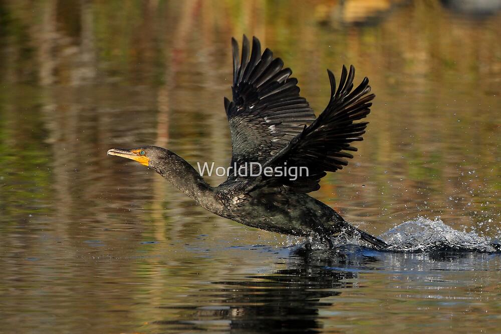 Cormorant Takeoff by WorldDesign