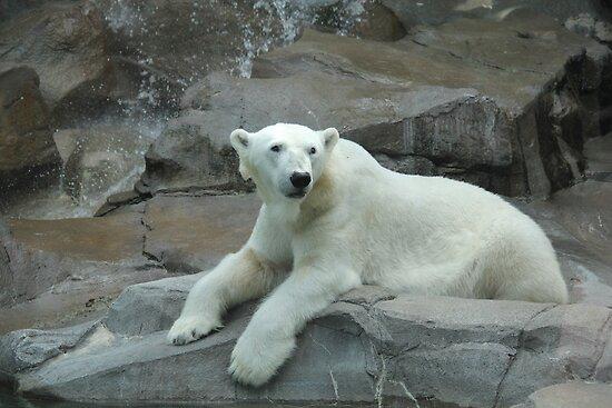 """Polar Bear""  by Carter L. Shepard by echoesofheaven"