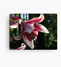 "Lily ""Silk Road"" Canvas Print"