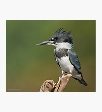 Male Belted Kingfisher Photographic Print