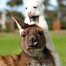 Little White Roo. by yook