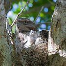 Two New Chicks by byronbackyard