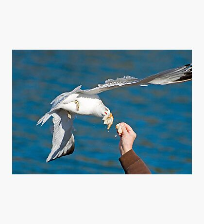 Seagull Get The Bread Photographic Print