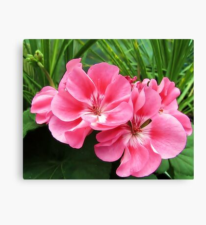 Tropical Pink Canvas Print