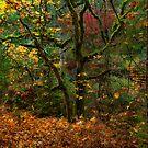 Spirit of Leaves by Thomas Dawson