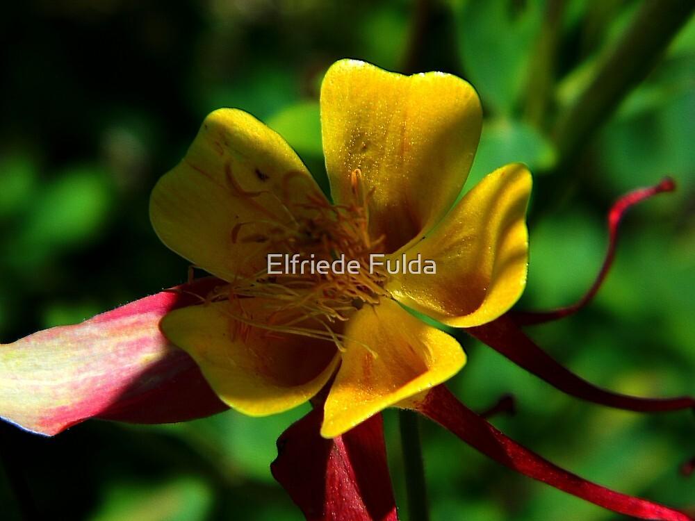 Ribbons ! by Elfriede Fulda
