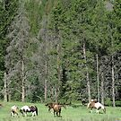 PACK STRING HORSES ON MAIN BOULDER CANYON ROAD by May Lattanzio