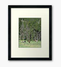 PACK STRING HORSES ON MAIN BOULDER CANYON ROAD Framed Print
