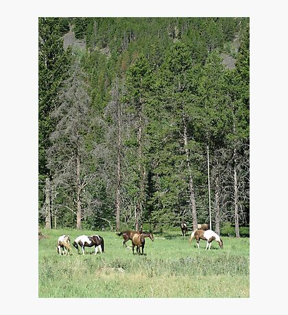 PACK STRING HORSES ON MAIN BOULDER CANYON ROAD Photographic Print