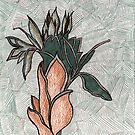 76 - PLANT DESIGN - DAVE EDWARDS - COLOURED PENCILS - 1998 by BLYTHART
