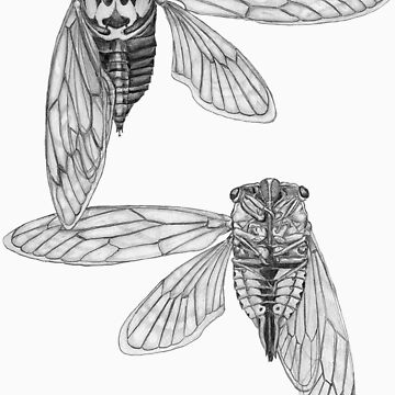 Cicada Study in Black and White by Biomechanoid56