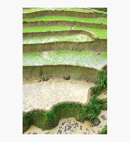 Rice Terrace Photographic Print