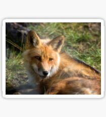 Red Fox Sticker