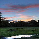 Summer Sunset over a Grassy Park by Phill Sacre