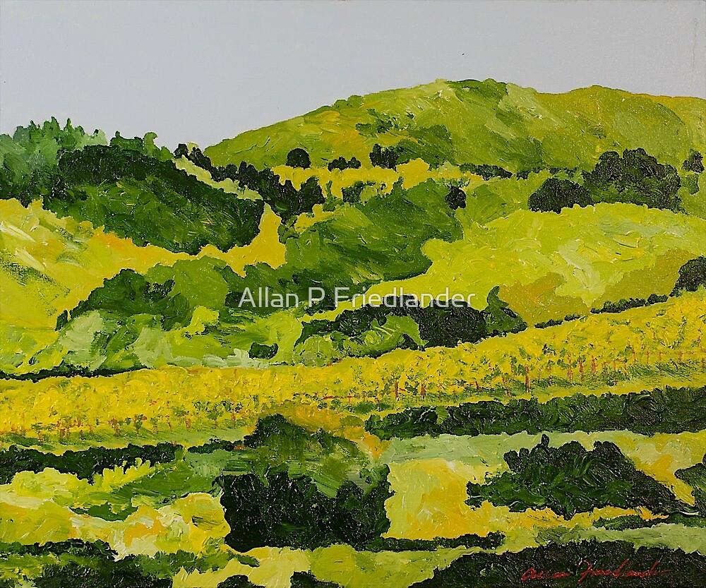 Vineyard in the Hills by Allan P Friedlander