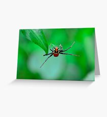 Amazing spider man Greeting Card