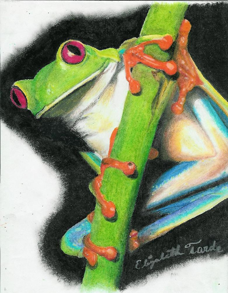 Red-eyed Tree Frog by elizabethtarde
