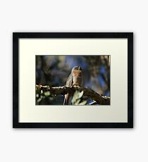 Fan-tailed Framed Print