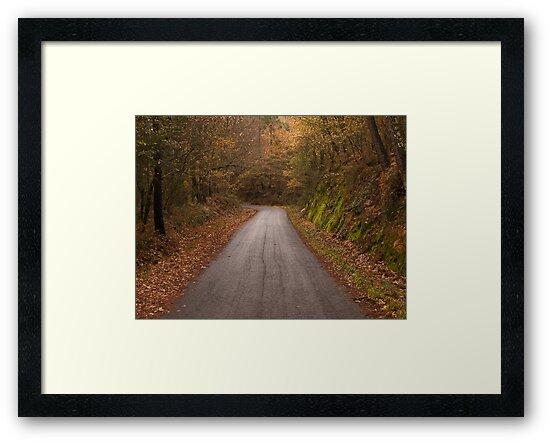 Country road by Fraizkonzept