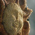 Sunshine Feeder by Eric Weiand
