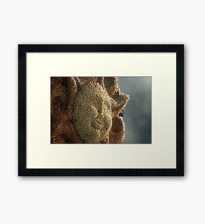 Sunshine Feeder Framed Print
