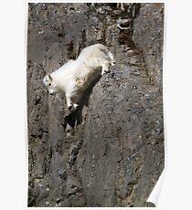 Wildlife Olympics - Tricky Dismount, Mountain Goat Kid Poster