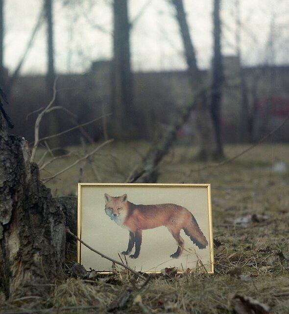 Little fox by PetraEs