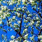 Snow Flowers by Pauli Hyvönen