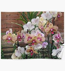 Gardens of the World - Orchids III Poster