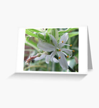 Six in a Group Greeting Card