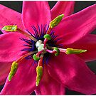 Passion Flower by patapping
