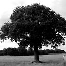 Stour River - Lone Tree by rsangsterkelly