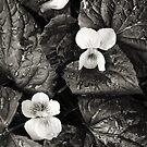 Flowers, Trailside by Pete Paul