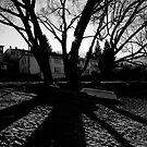 Symmetric Shadows by Sheaney
