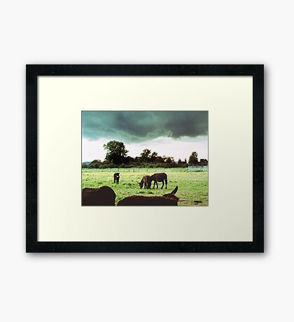 Self-Appointed Inspector of Donkeys and Rain Storms Framed Print