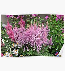 flowering plants Poster