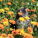 Fluff between the daisies by Antionette