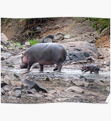 New born hippo Poster
