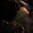 Flow by Richard Owen