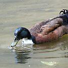 Darth Duck by Alex Call